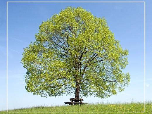 arbre supervision